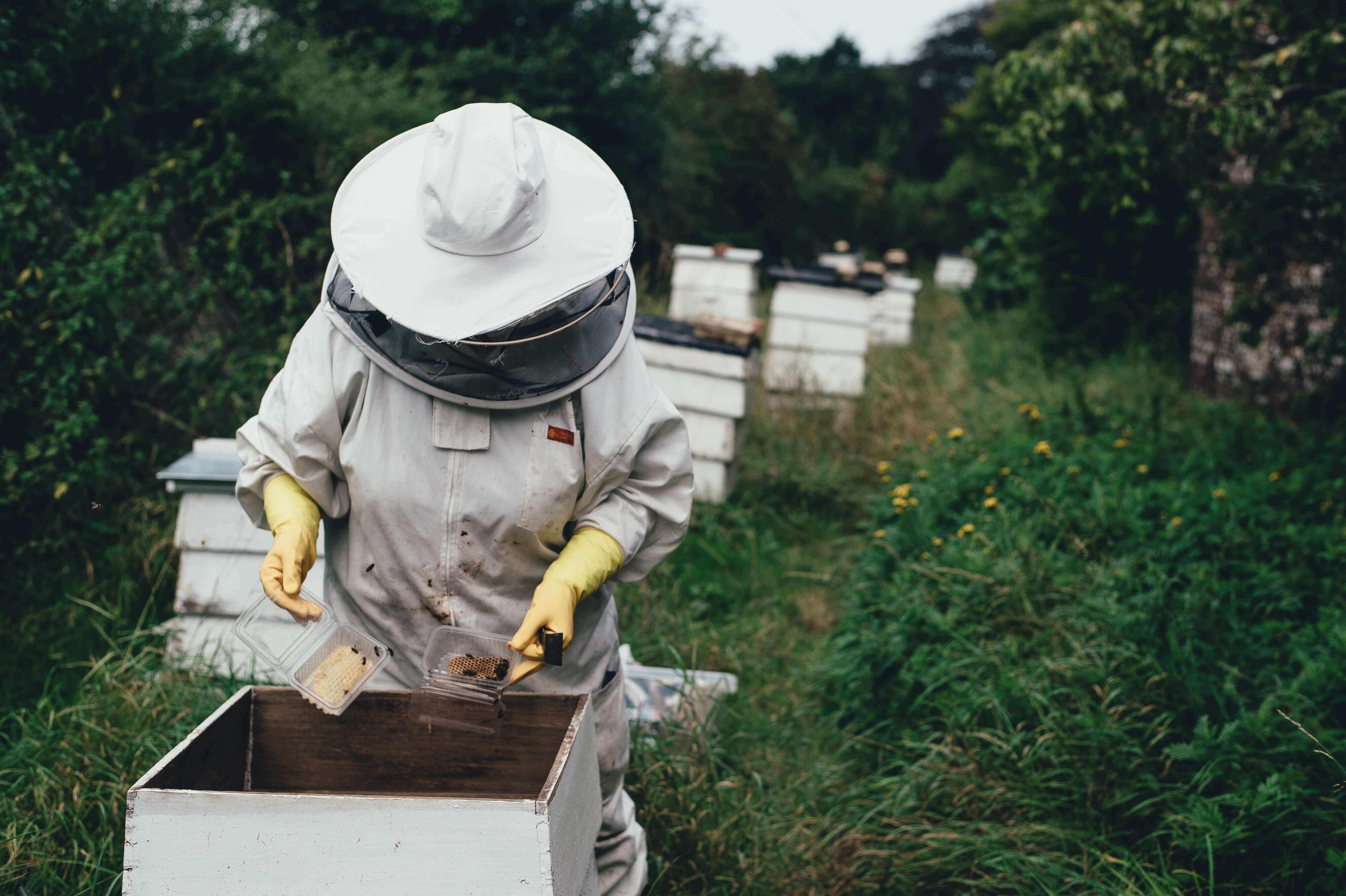 Ein Imker checkt die Bienen
